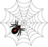 教你如何让吸引蜘蛛的小技巧